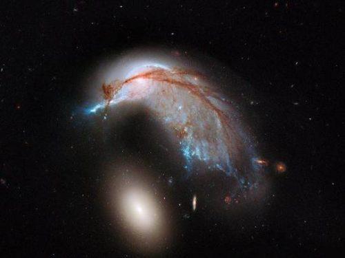 Come un pinguino la galassia di Hydra