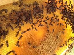 L'alveare 3.0 salverà le api senza lo Stato a supporto