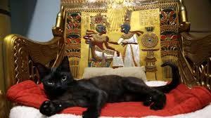 17 febbraio, Giornata Nazionale del gatto