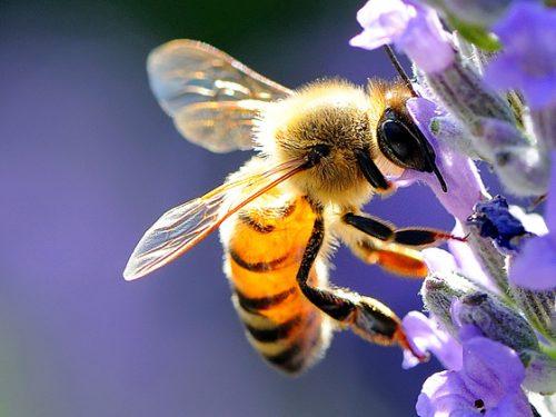 Nasce a Milano l'autostrada delle api