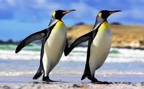 Scoperte in Antartide nuove colonie di pinguino imperatore